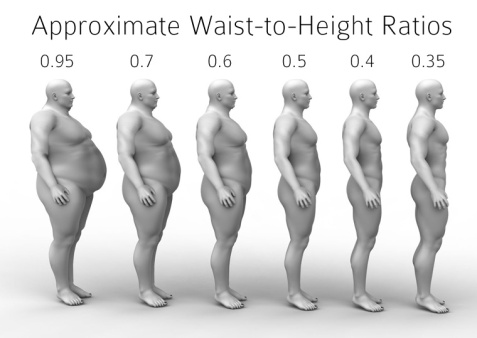 waist-height-ratio-illustration